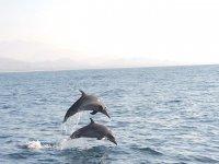 Observación de delfines con nuestros paseos en lancha