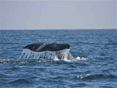 La Paz Sportfishing Whale Watching