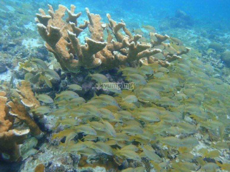 arrecife cancún