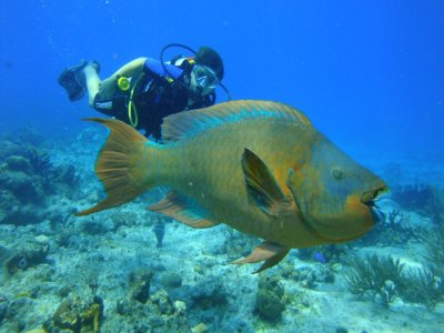 Programa de buceo para principiantes en Cancún