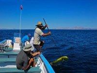 Fishing a dorado