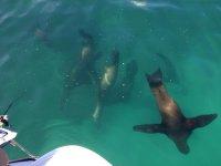 Sea lions in Puerto