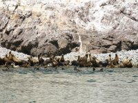 Sea lion community