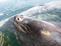Conociendo a las ballenas
