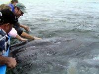 Tour para ver a las ballenas