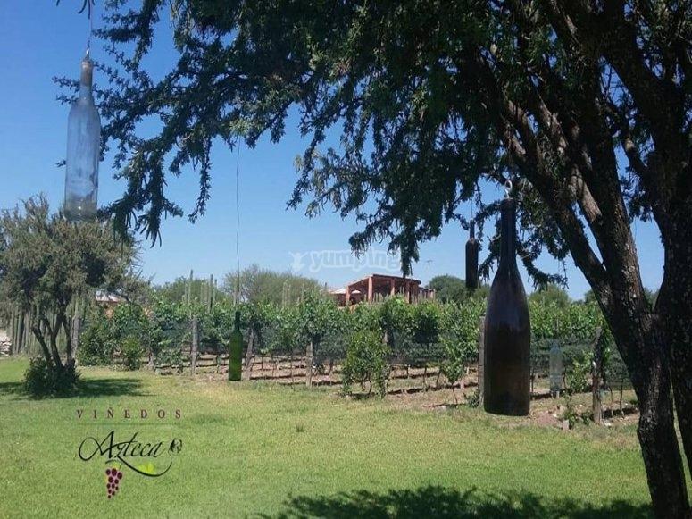 Vineyards in Ezequiel