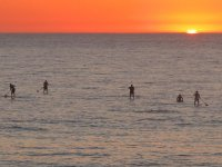 Paddle surf sunset