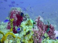underwater stones