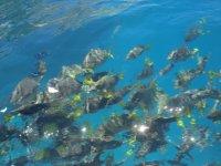 Peces del Pacifico