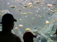 Admiring aquarium fauna