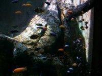 Fauna subacuática