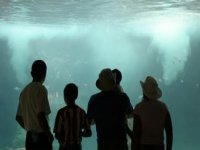 Frente al acuario
