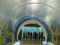 Tunel acuario