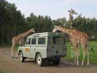 Safari Guadalajara