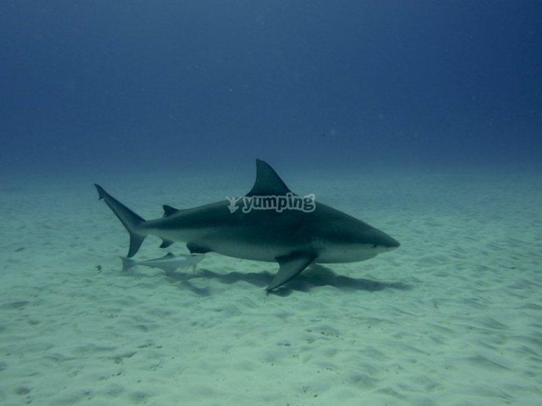 Nadando en el caribe