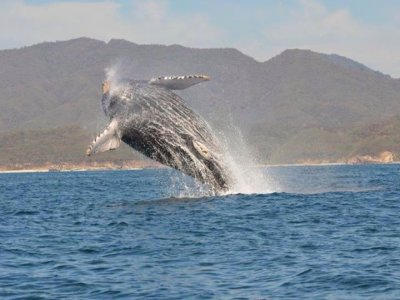Eco-Aventours Whale Watching