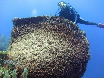 Chetumal Dive Club