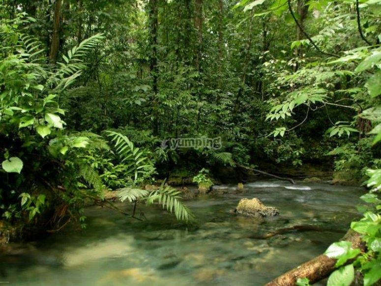 Experiencia en un entorno 100% natural
