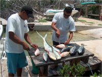 Fileteando pescado