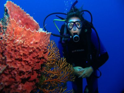 Diving excursion with 2 tanks, Colombia Reef
