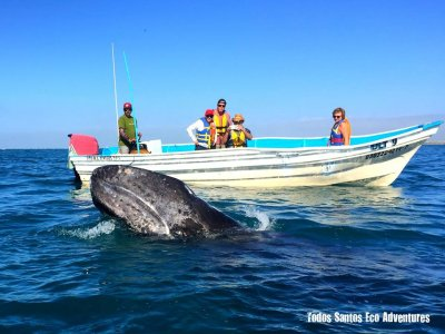 2 days whale watching outing in Bahía Magdalena