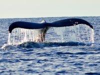 Tour de avistamiento de ballenas en Todos Santos