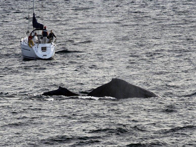 Encuentro con ballenas
