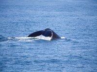 Whale Watching en Bahía de Todos Santos 3 horas