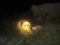 safaris Night