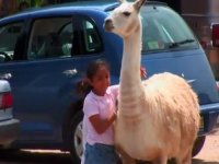 Zoofari safari