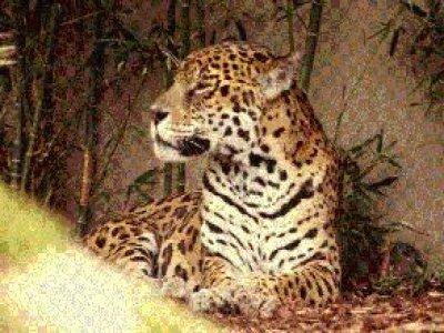 Parque Zoológico Irapuato