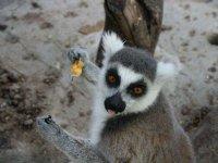 Hermosas criaturas en nuestro zoológico