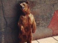 Ven a conocer a este precioso oso
