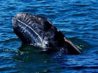Conocer a las ballenas