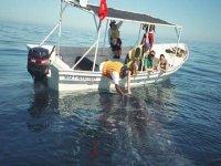 Tocar a la ballena