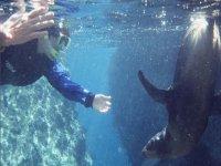 Snorkel con leon marino