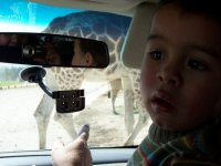 Animals outside the vehicle