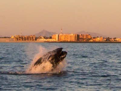 Eco Fun Rentals Whale Watching