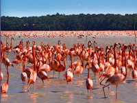 Flamingo excursion
