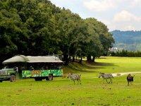 Safari and animals