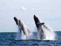 ballenas en el pacifico