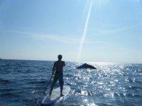 proyecto ballenas