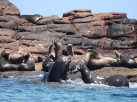 Views of the sea lion colony
