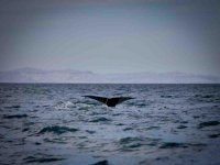 Paseos de whale watching