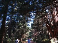 Bosque de parque