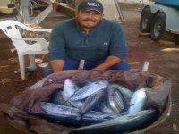 Cosecha de pesca