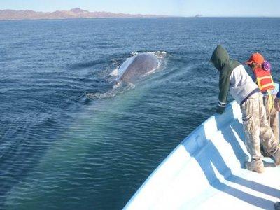 Baja Big Fish