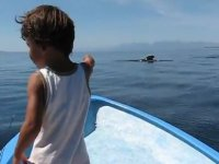 Admirar las ballenas