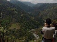 Forested landscapes