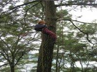 Tree rappel